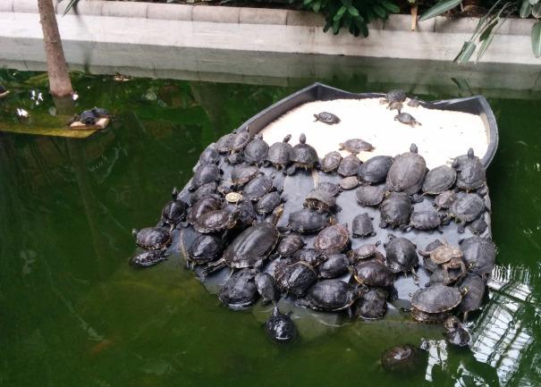 """Potká želva želvu: """"Na krunýř ti vlezu!"""""""