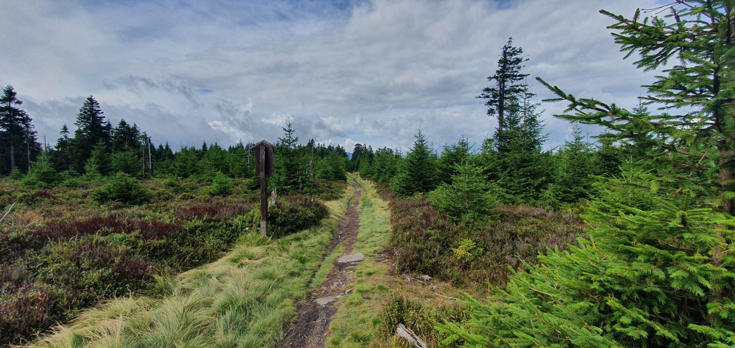 Smrk (1127 m.n.m., Rychlebské hory) - trail kousek od vrcholu